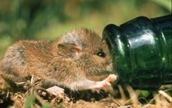 Ecologie noblet les bouteilles sont des pi ges mortels - Piege a mulot ...